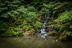 Portland Japanese Garden-12