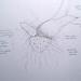 Estudio lineal.