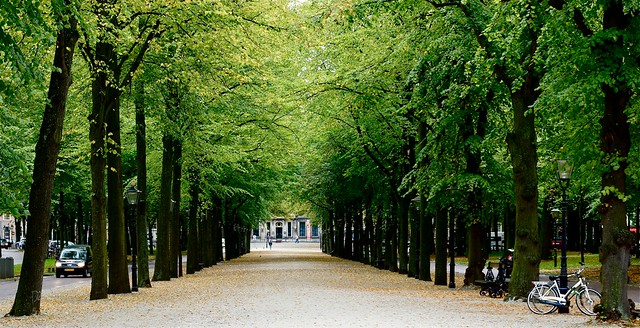 Liesje leerde Lotje lopen langs de lange lindenlaan. Foto door Roel Wijnants, op Flickr.
