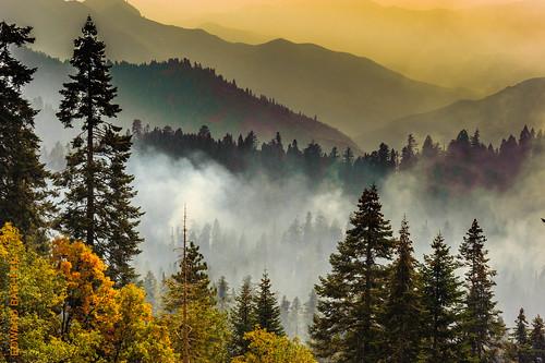 baum berg california kalifornien landscapeusa landschaft pflanze sequoianationalpark usa unitedstatesofamerica wald forrest landscape mountain plant tree vereinigtestaaten nikond3 80400mmf4556