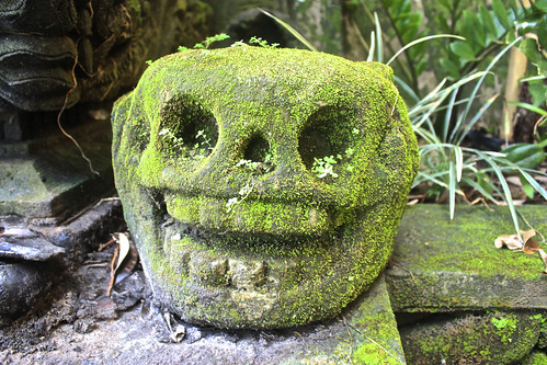 an overgrown skull… reminded me of a chia pet