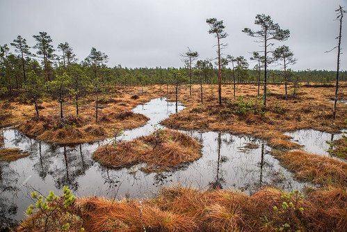 suomi finland nationalpark hike swamp kansallispuisto suo vaellus southernostrobothnia isojoki lauhanvuori