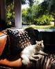 Paradise found. #catsofinstagram #mornings #phoenix #chill