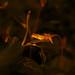 The sneaky reptile by Debmalya Mukherjee