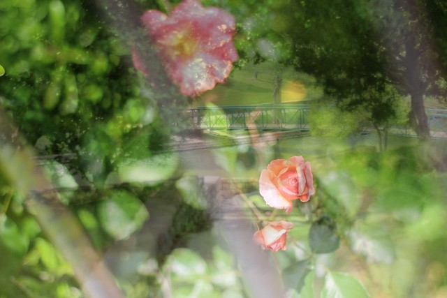 doubleexposures5