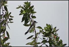 lake birds #5