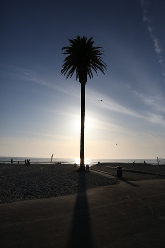 palm tree HDR-0302