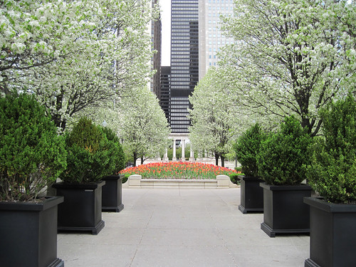 Flowering trees in Millennium Park, Chicago
