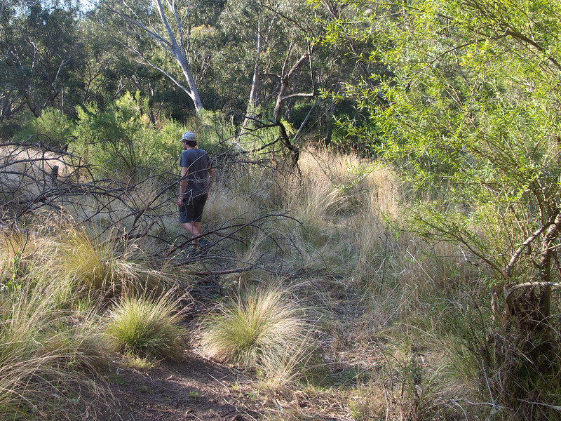 Bush walk in the Organ Pipes National Park