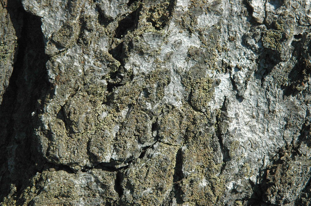 Is it rock or is it wood?