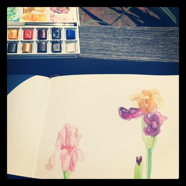 Sketching iris with Memphis urban sketchers