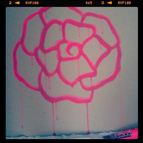 Neon pink rose