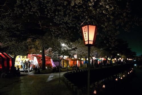 高田・夜桜 2