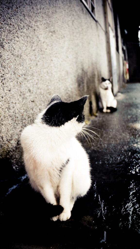 有故事的貓
