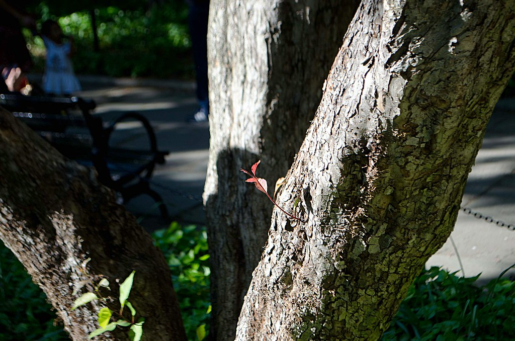 trunk with red leaf20130517-DSC_2987.jpg
