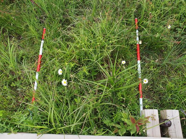 湿原の植物と,ススキや外来種が一緒に生えているプロット.場所によって植生はずいぶん違う.