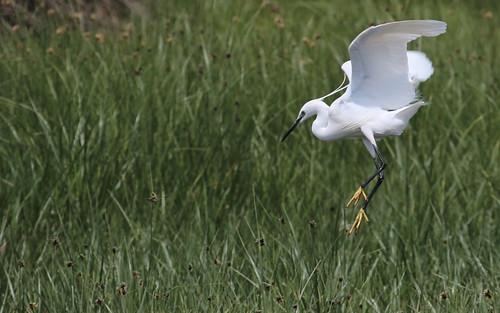 Elegant landing. by ricmcarthur