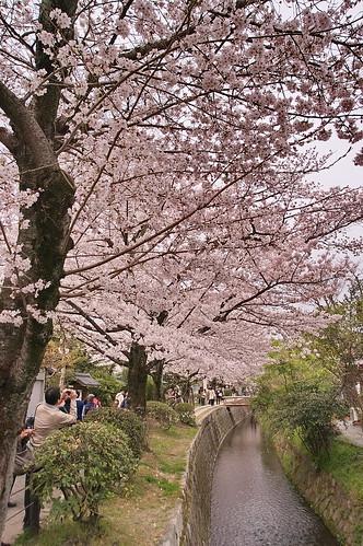 【写真】2013 桜 : 哲学の道/2018-12-24/IMGP9216