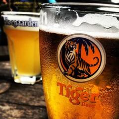 Tiger vs Hoegaarden. Cheers!