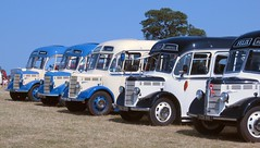 Bedford OB coaches gathered together at Long Melford Vintage Rally 2013