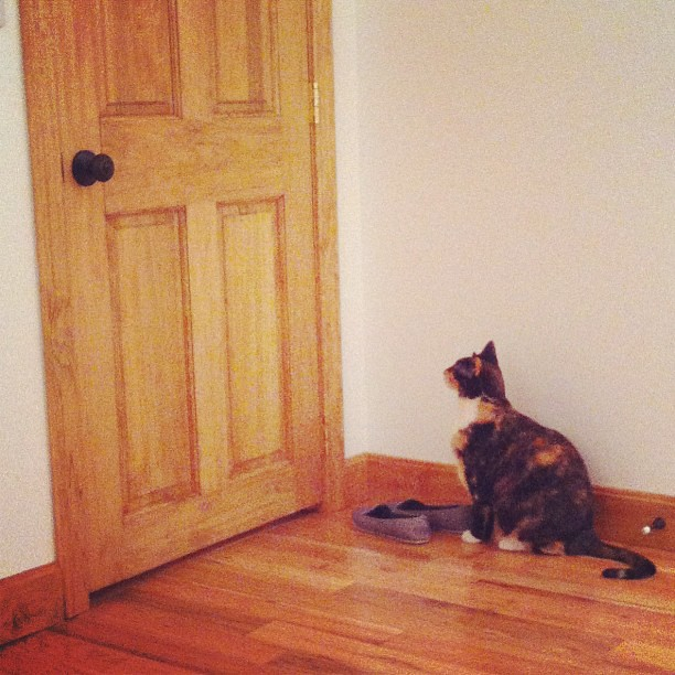 Ginger has explored this room and wants to know what else she can check out. #homestead #farmhouse #familyjourney #cat #catsofinstagram