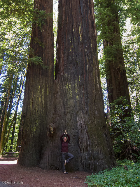 05Jul2013_redwoods-2638