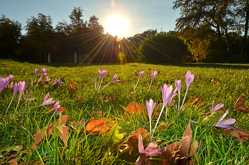 "Fall Bloomers - Enjoy Autumn Time with "" Naked Ladies "" ..."
