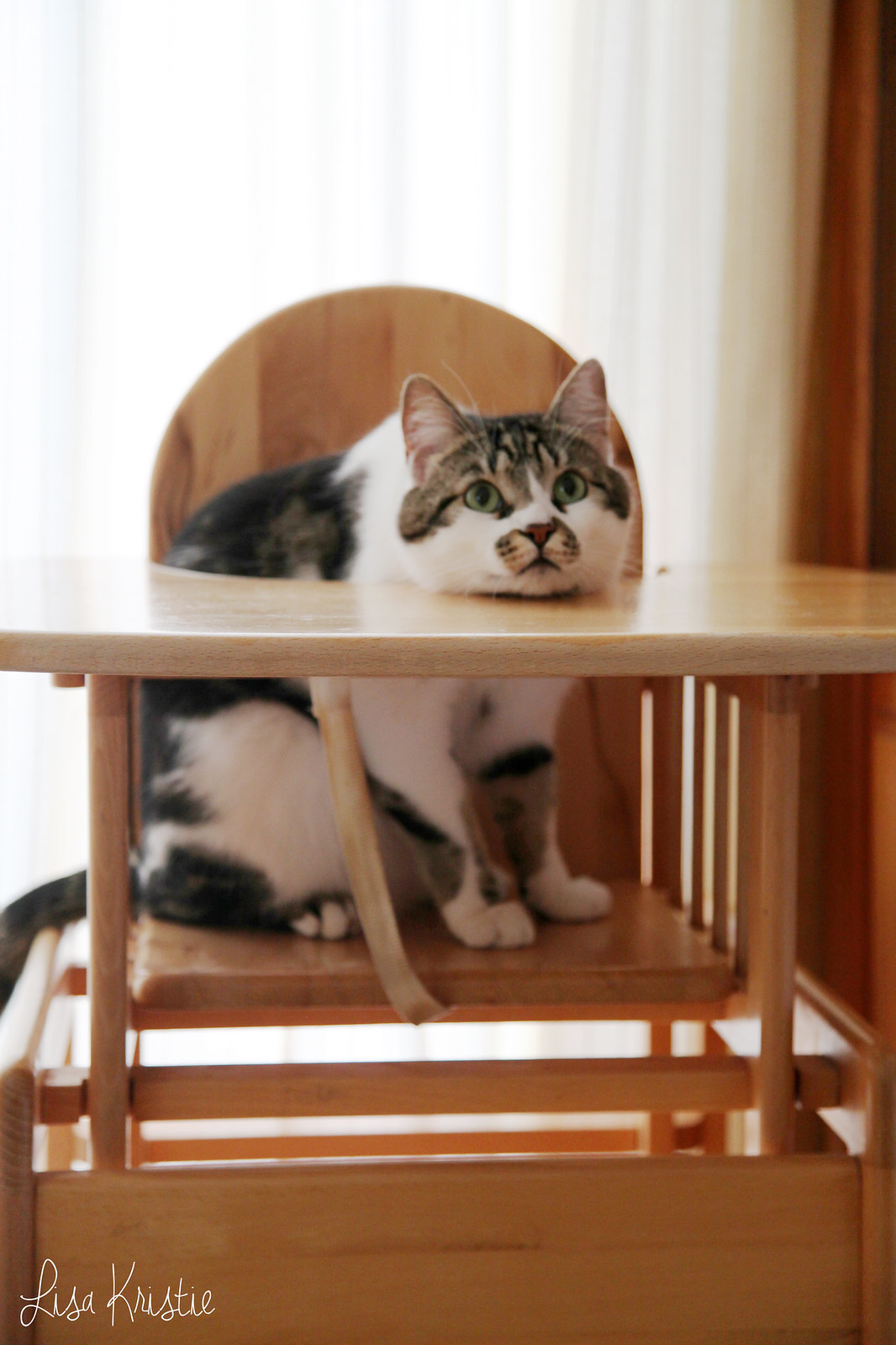 cat baby high chair cute funny pet adorable><br /> </center><br /> I&#8217;m fairly sure I can feel the baby move now. It&#8217;s still quite subtle though, so a slight doubt subsides at this point. I&#8217;ve been able to feel it roll around I think for a few weeks now; which doesn&#8217;t feel very pleasant. Yesterday I felt more like bubbles, which is what everyone&#8217;s been describing it as, so I&#8217;m assuming that was most likely it. </p> <p>Anyway, that&#8217;s about it for now I guess. This was a long post as I had quite some catching up to do! I&#8217;ll try to get back into my weekly routine. </p> <p> ♥︎ <em>Lisa</em></p> <div data-animation=