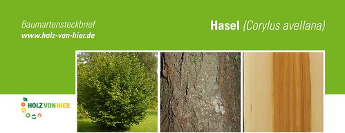 Hasel-Header