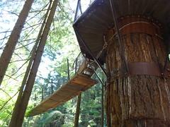 wood, tree, tree house,