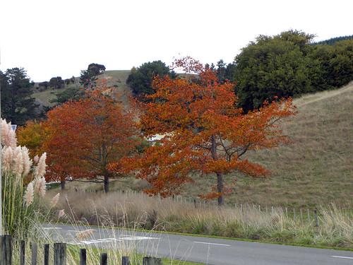 autumn newzealand fall aotearoa wairarapa autumncolour tinui castlepointweekend2015 tin6446