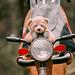 cyclists (3 из 1) by irina.slavich