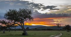 Y1A1683 Olarro, Kenya