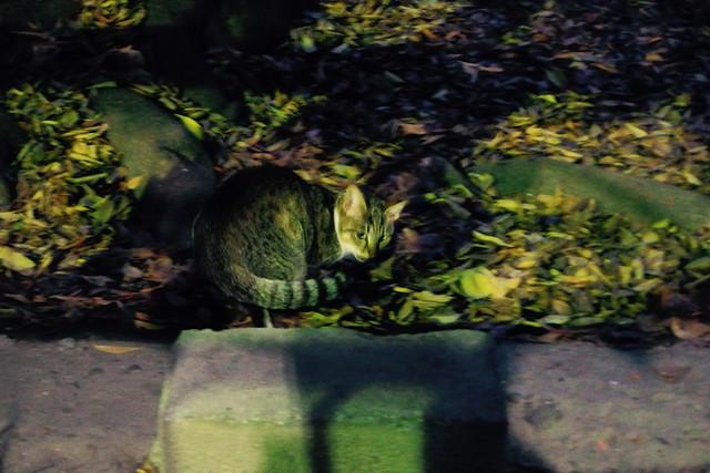 Today's Cat@2016-11-26