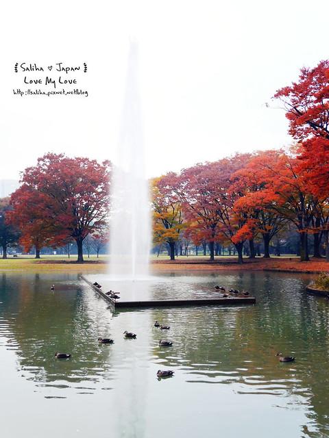 日本東京景點澀谷區代代木公園賞楓葉 (21)