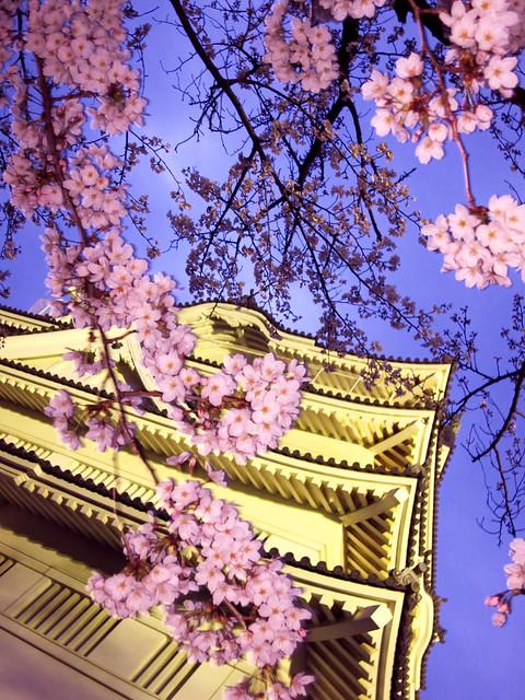 Sakura Chiba Castle