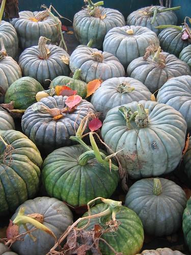 Pumpkin Harvest April 2012