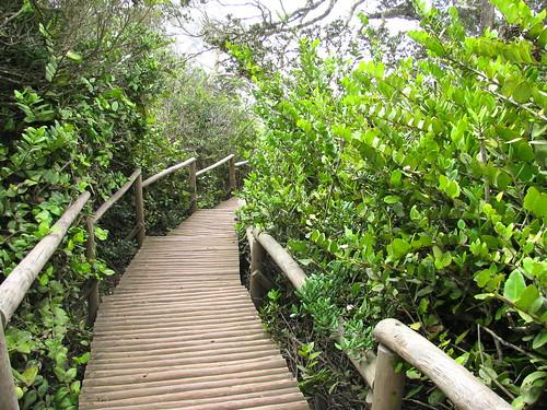 Parque Nacional Bosque Fray Jorge, Chile