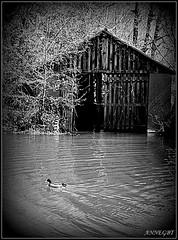le garage à bateau