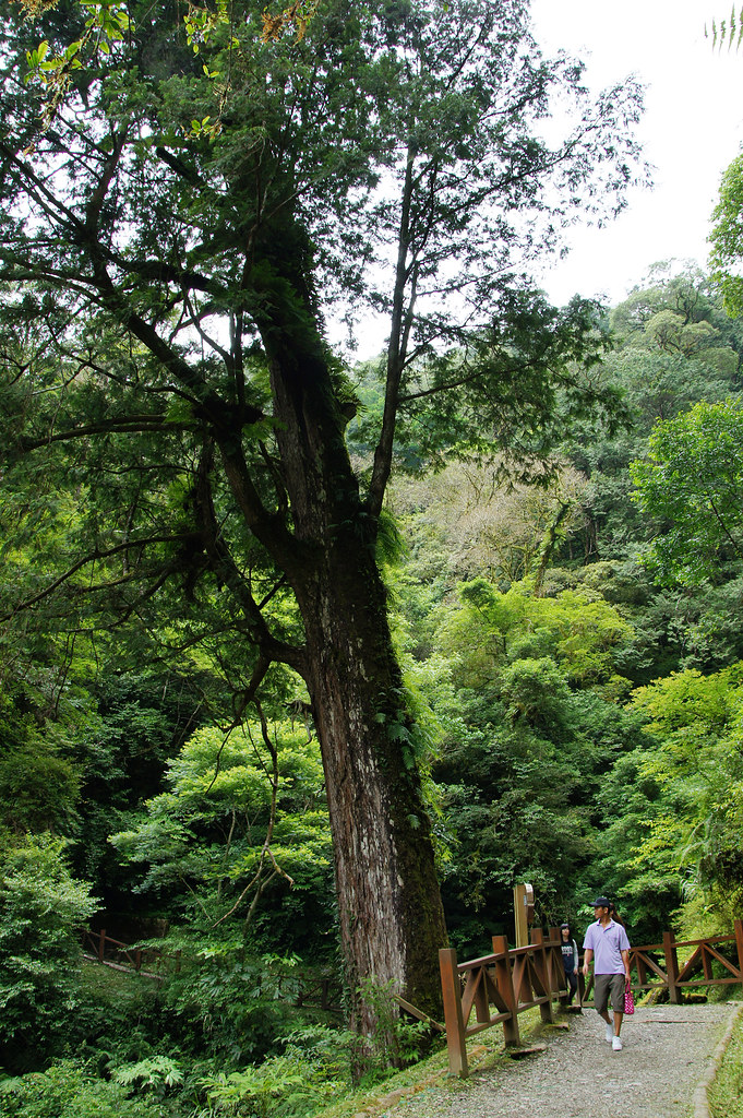巨木群,與往拉拉山的路上-078