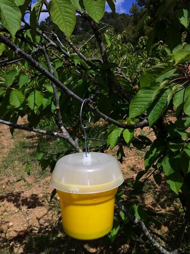 Begues | Apadrina Cirerers | Vinagre para las moscas