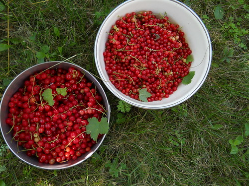 two bowls of red currants