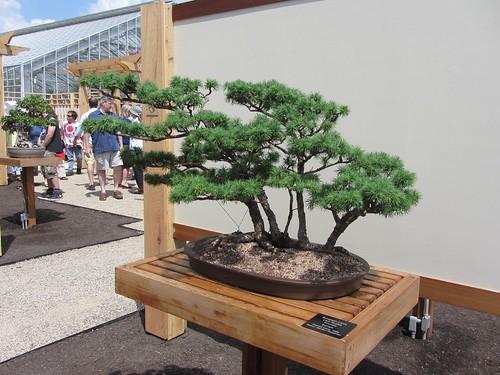bonsai0713