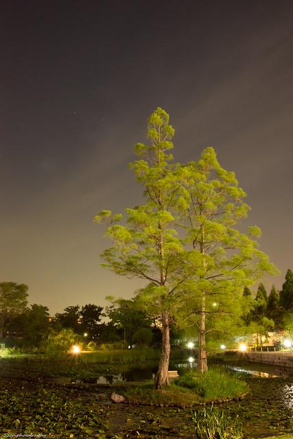 浜寺公園 #13