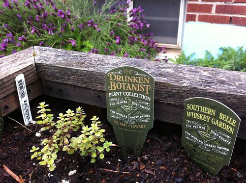 my 2013 herb garden (annex)