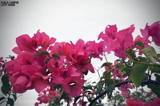 Bunga Kertas (Kuala Lumpur)