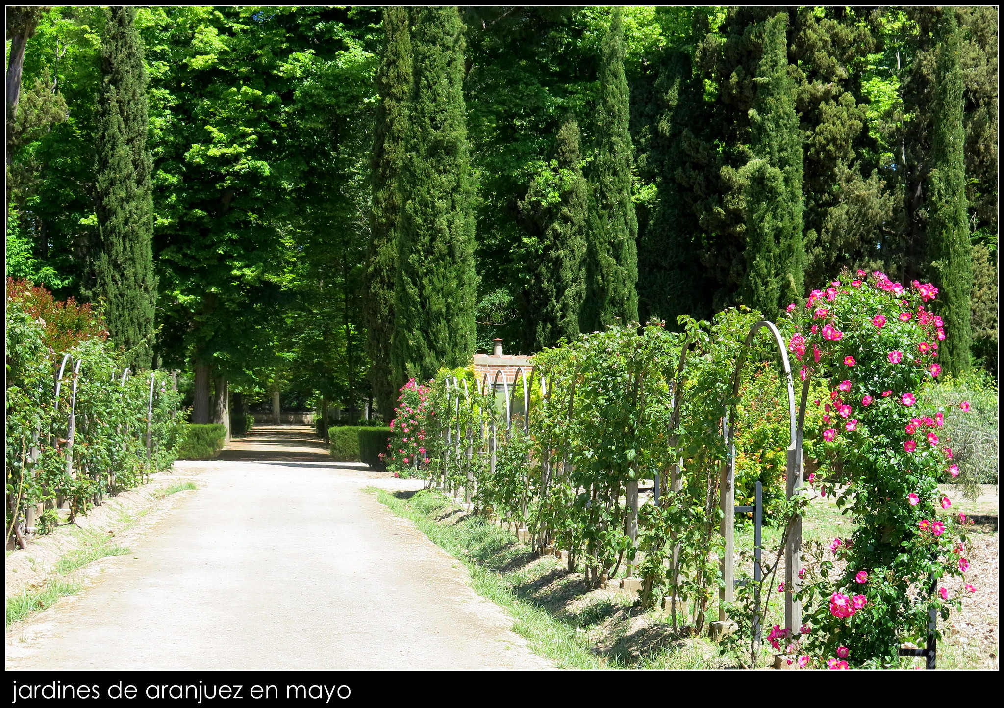 Jardines de aranjuez en mayo y r o tajo jardines de for Jardines de aranjuez horario