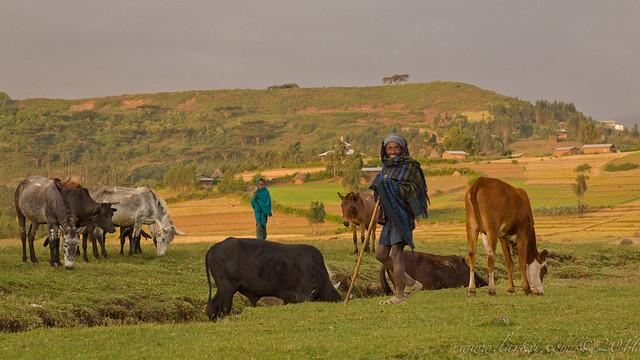 Herders, Mekane Eyesus, Ethiopia, 2011