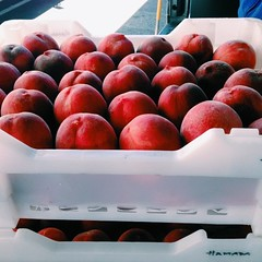 Bought 37 lbs of white peaches at the #farmersmarket. Southern cooking this week. #mshcooks