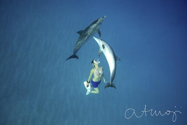 Bimini Dolphin Swim - 10/2013